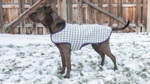 graphic regarding Dog Coat Sewing Patterns Free Printable named Cutest compensated totally free printable doggy dresses behaviors - Swoodson