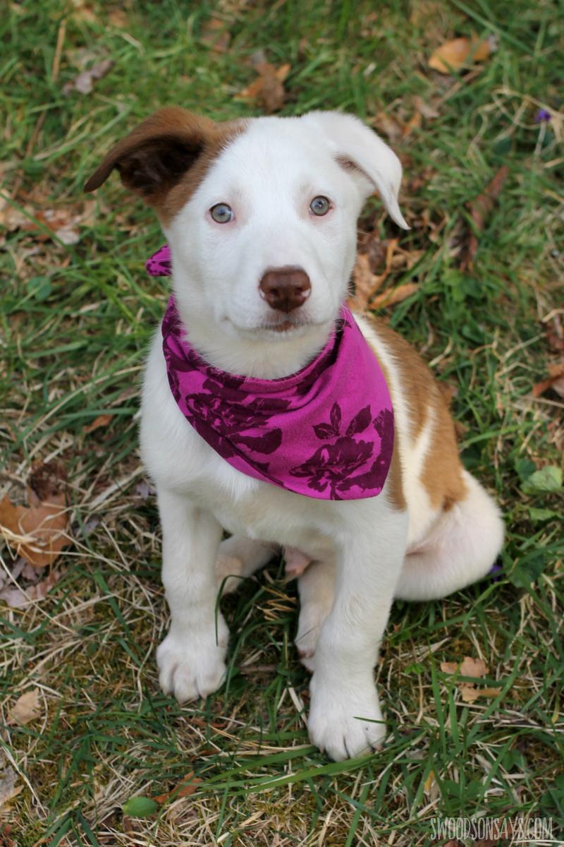 upcycled dog scarf diy