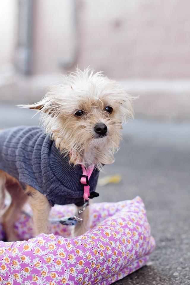 upcycled dog jacket